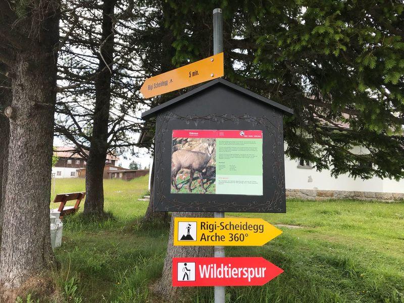 Wildtierspur Rigi Scheidegg