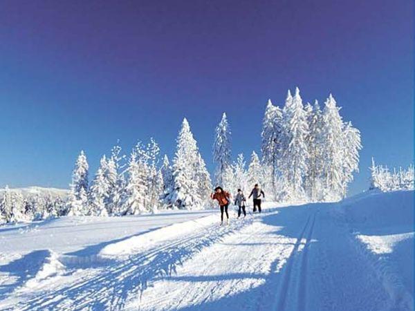 Wintertraum beim Skiwandern am Bergrücken Hohenbogen