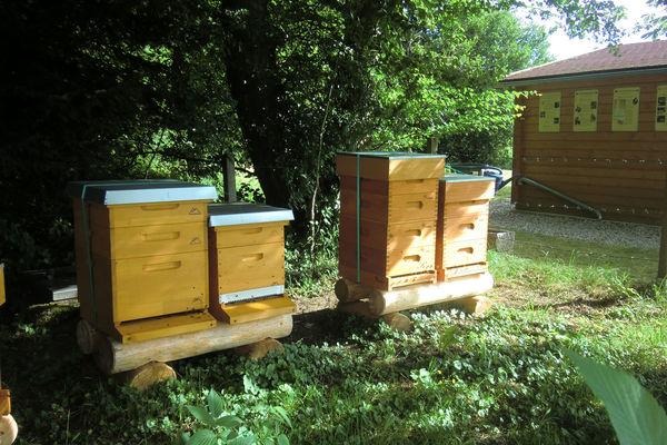 Bienenkästen