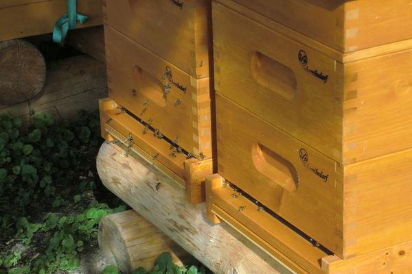 Ein- und Ausflug der Bienen an den Bienenkästen