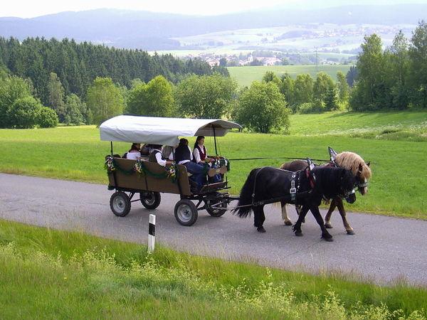 Die Landschaft auf dem Pferdewagen bei der Fuhrleute-Gedächtnisfahrt in Rinchnach genießen