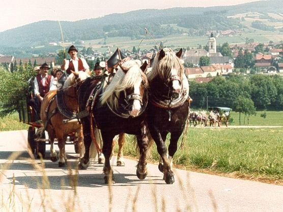 Prächtige Pferdegespanne gibt es bei der Fuhrleute-Gedächtnisfahrt in Rinchnach zu bewundern
