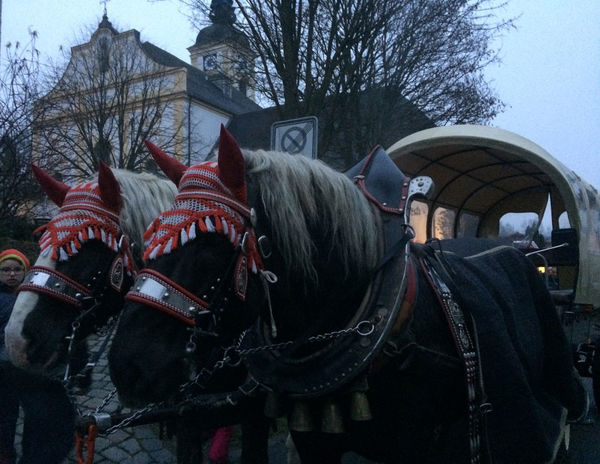 Pferdekutschfahrten Rinchnach: Georg Marchl