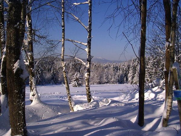 Herrlicher Winterwald im Langlaufgebiet Kohlau bei Rinchnach im Bayerischen Wald