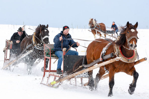Rasant geht es beim Rinchnacher Pferdeschlittenrennen zu