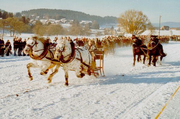 Zweikampf der Gespanne beim Pferdeschlittenrennen in Rinchnach