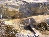Der Steinbruch in Grub bei Rinchnach im ArberLand Bayerischer Wald