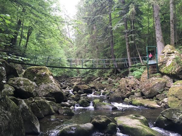 Nicht nur für Kinder ein Highlight der Wanderung: Die Hängebrücke über der Wolfsteiner Ohe.