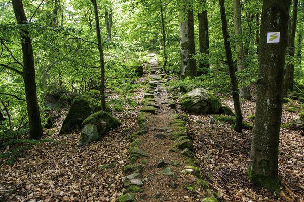 Wanderung auf der Goldsteig-Etappe N8 bei Rötz