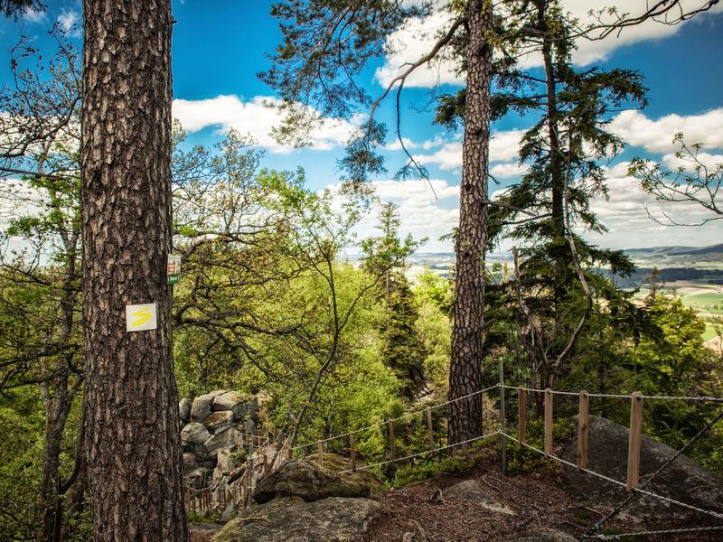 Der Goldsteig führt durch das Naturdenkmal Steinerne Wand