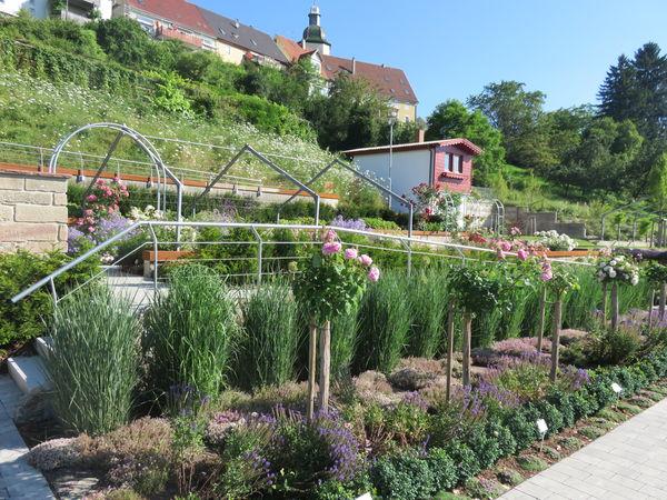 Rosenfeld Rosengarten