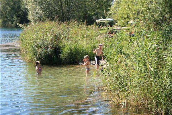 Uferbereich mit Schilf am Happingerausee