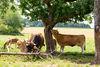 Der Biohof Land.Luft im idyllischen Niederbayern betreibt eine ganzjährige Freilandhaltung der Nutztiere.