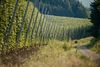 Beeindruckende Hopfenlandschaft bei Wildenberg