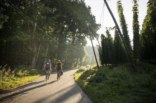 Hopfengärten säumen die Hallertauer Hopfentour