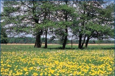 Naturschutzgebiet Mönchbruch
