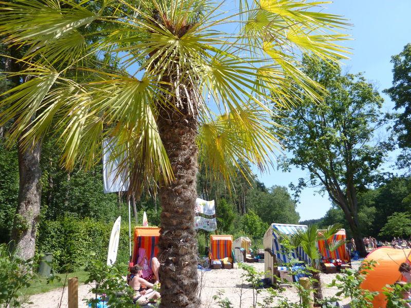 Strandlandschaft mit Palmen und Strandkörben von der Ostsee