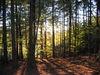 Waldimpressionen Abendstimmung
