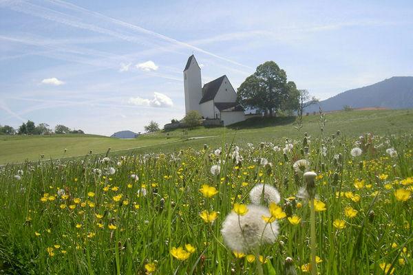 Sankt Peter in Steinkirchen mit blühender Wiese
