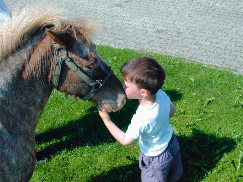 Kinderspaß mit Ponys auf dem Haidberg Hof bei St. Englmar im Bayerischen Wald