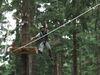 Nervenkitzel im Kletterwald in St. Englmar