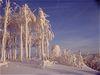 Wintertraum am Hirschenstein bei einer Schneeschuhtour in der Urlaubsregion St. Englmar