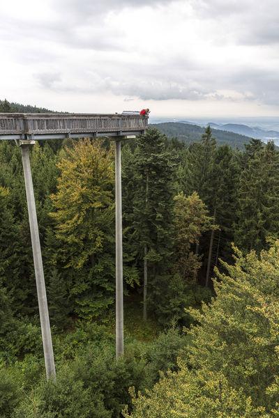 Der Waldwipfelweg in Maibrunn bei Sankt Englmar bietet eine eimalige Ausicht