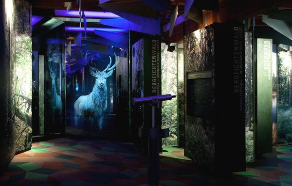Die Installation Waldgesellschaften im Waldgeschichtlichen Museum St. Oswald