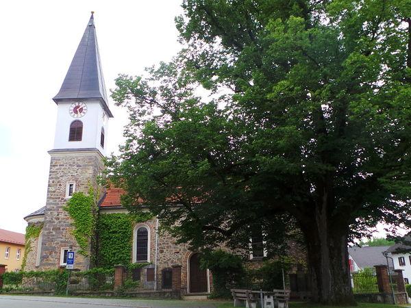 Imposante Linde neben der Pfarrkirche in Schaufling im Lallinger Winkel