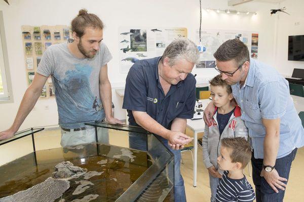 Meerestiere im Aquarium entdecken