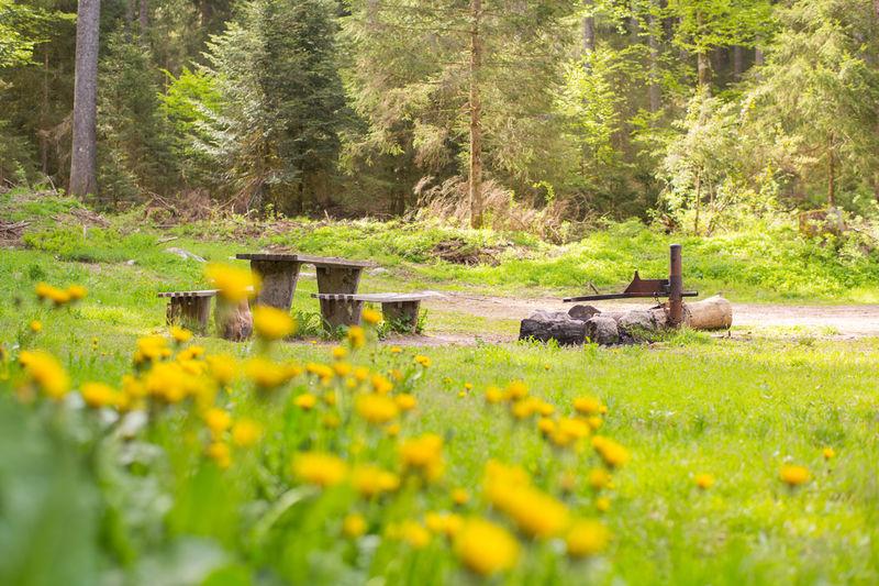 Grillplatz Kaisertanne, Sitzbänke  und Grill im Frühjahr