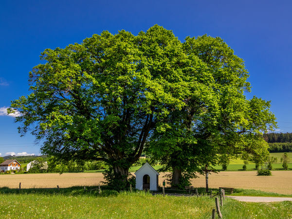 14 Nothelfer Kapelle bei Schmallenberg