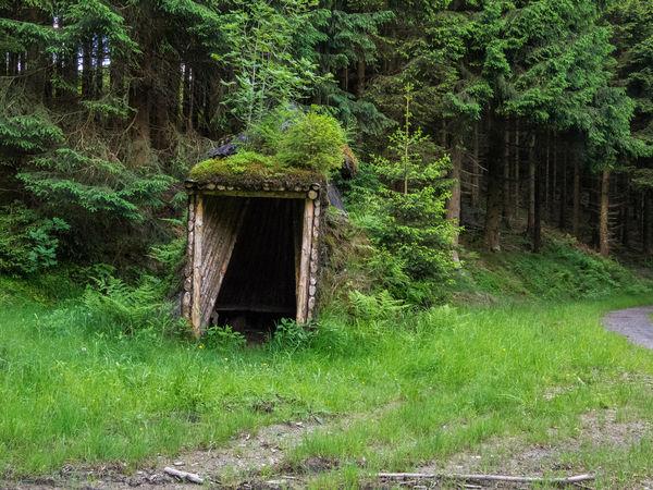 Köhlerhütte am Wesenberg
