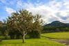 Obstbaum mit Blick auf den Lochenstein