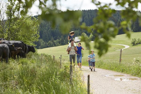 Schneckenwanderung - langsamster Wanderweg im Schwarzwald