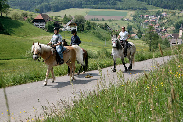 Pferde vom Engelhof