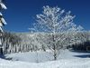 Am tief verschneiten Mummelsee
