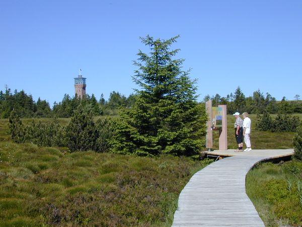 Grindenpfad und Hochmoor Hornisgrinde