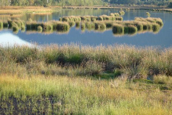Naturschutzgebiet Seeoner Seen.