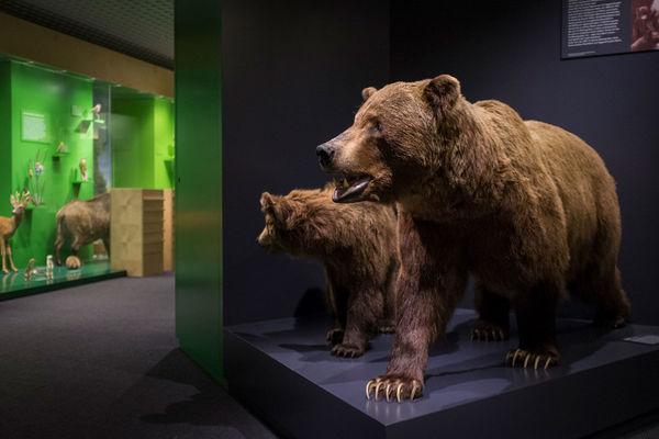Ausstellung Naturmuseum