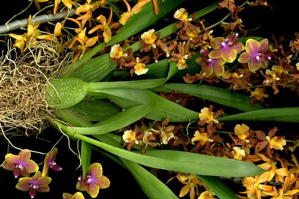 Flores Blumenbinderei