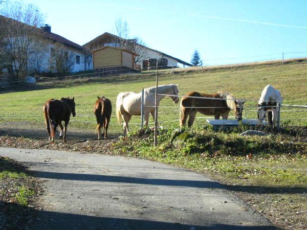 Pferde auf der Reitanlage HK SUNWOOD BARNS in Sonnen im Bayerischen Wald