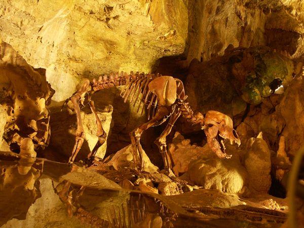 Skelett vom Höhlenbär in der Bärenhöhle