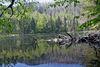 Urwald am Rachelsee im Nationalpark Bayerischer Wald
