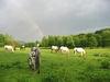 Pferdeherde bem Highlander Ranch Reiterhof in Spiegelau am Nationalpark Bayerischer Wald