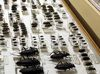 Verschiedene Käferarten sind in der Tourist-Information Spiegelau zu bewundern