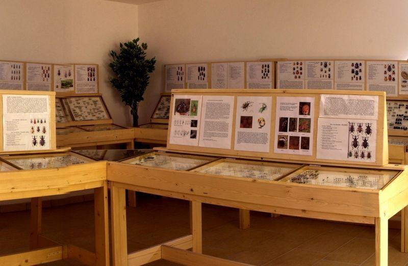 Die Käferausstellung in Spiegelau