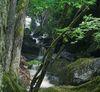 Mit Moos bewachsene Felsen in der Steinklamm in Spiegelau