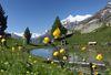 Idyllischer Bergsee Jungen Alp