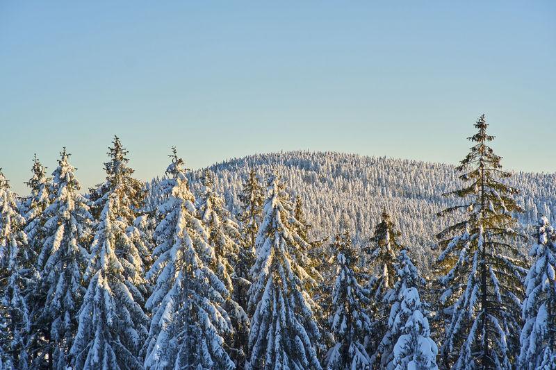Der Bayerische Wald ist für Langläufer ein echter Wintertraum